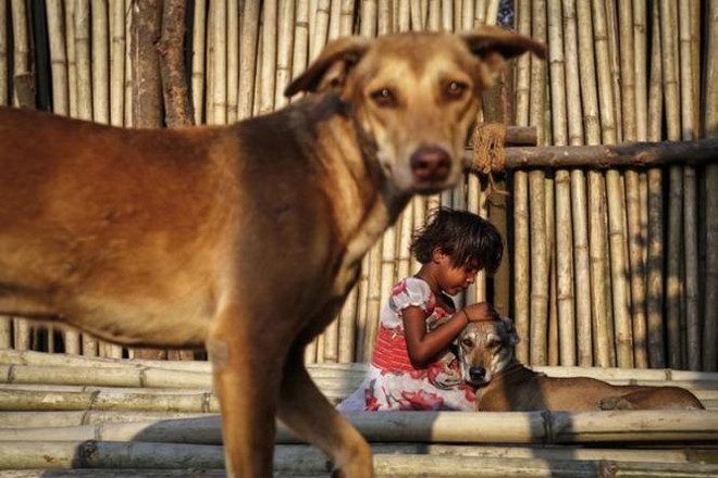 India_compaixao_animal